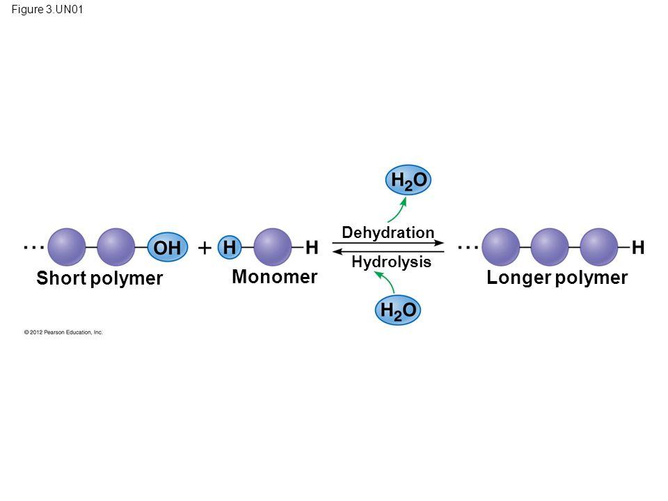 Figure 3.UN01 Short polymer Monomer Dehydration Hydrolysis Longer polymer