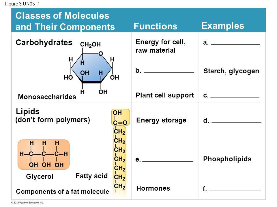 Figure 3.UN03_1 Carbohydrates Monosaccharides Lipids (dont form polymers) Glycerol Components of a fat molecule Fatty acid f. Hormones e. Phospholipid
