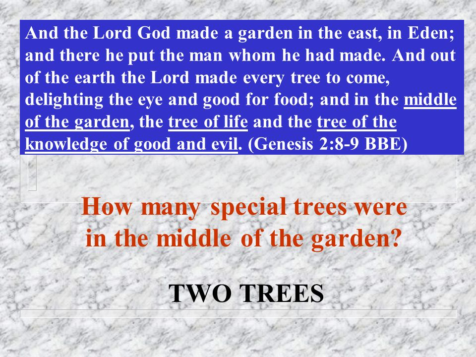 And the Lord God made a garden in the east, in Eden; and there he put the man whom he had made. And out of the earth the Lord made every tree to come,