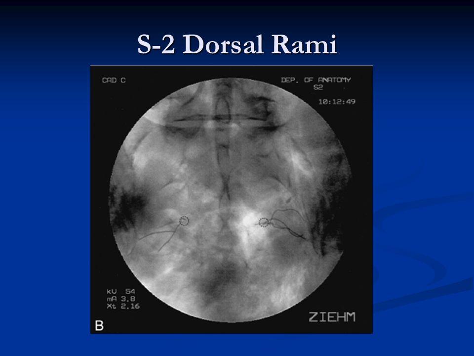 S-2 Dorsal Rami