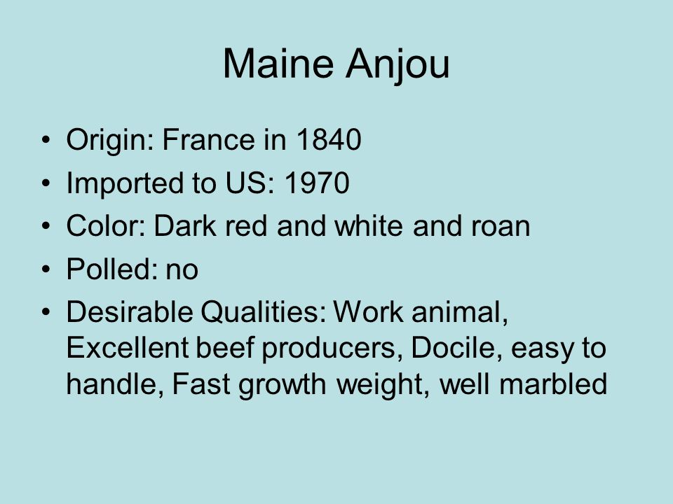 Maine Anjou Origin: France in 1840 Imported to US: 1970 Color: Dark red and white and roan Polled: no Desirable Qualities: Work animal, Excellent beef