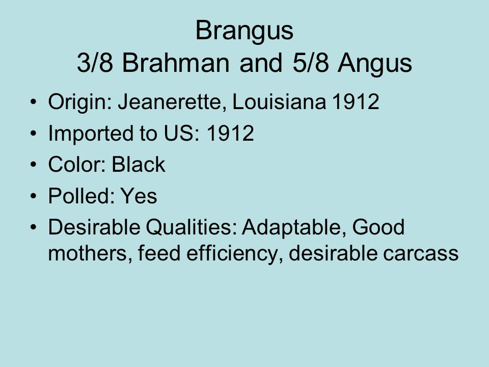 Brangus 3/8 Brahman and 5/8 Angus Origin: Jeanerette, Louisiana 1912 Imported to US: 1912 Color: Black Polled: Yes Desirable Qualities: Adaptable, Goo