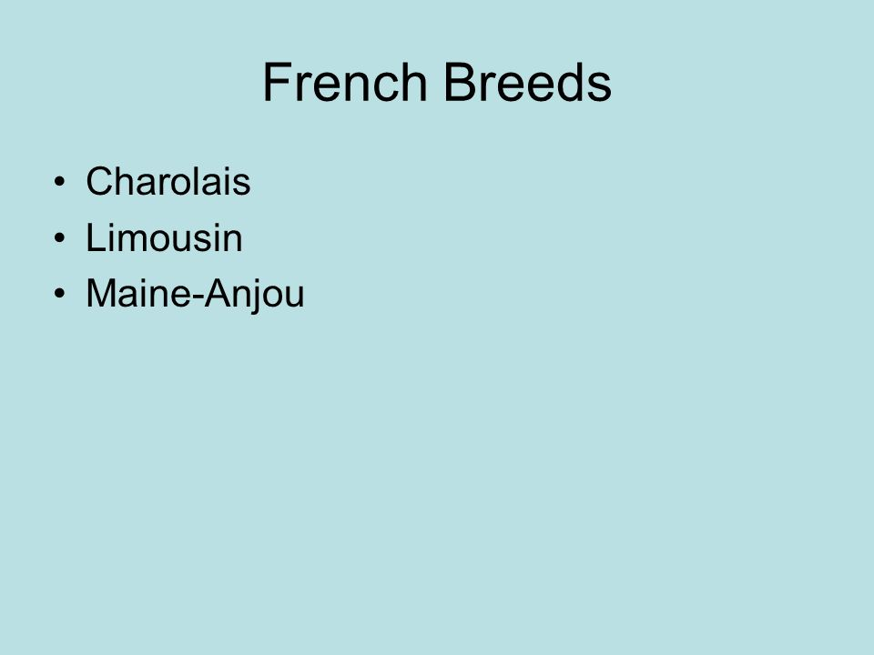 French Breeds Charolais Limousin Maine-Anjou
