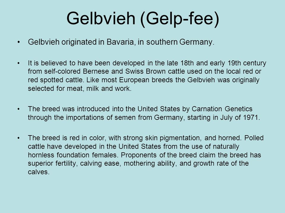 Gelbvieh (Gelp-fee) Gelbvieh originated in Bavaria, in southern Germany. It is believed to have been developed in the late 18th and early 19th century