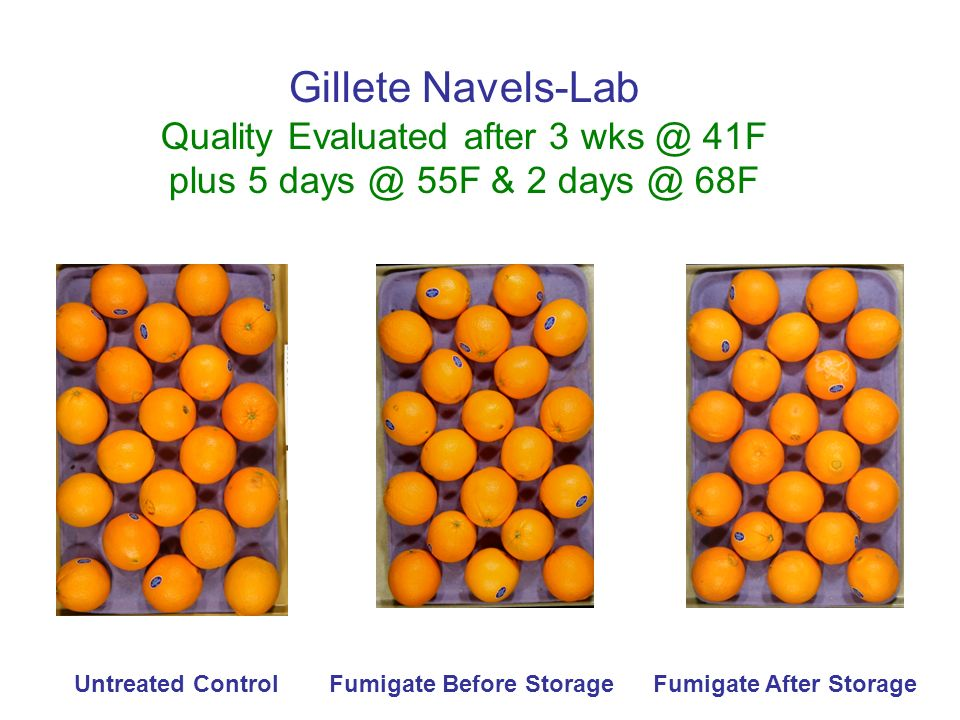 Gillete Navels-Lab Quality Evaluated after 3 wks @ 41F plus 5 days @ 55F & 2 days @ 68F Untreated ControlFumigate Before StorageFumigate After Storage