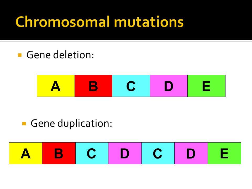 Gene deletion: AB CDE Gene duplication: ECDBA CD CDBAE