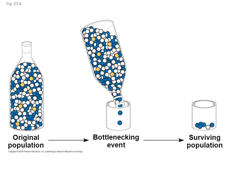 Fig. 23-9 Original population Bottlenecking event Surviving population