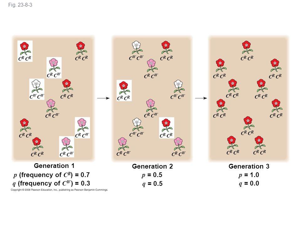 Fig. 23-8-3 Generation 1 C W C R C R C W C R C R C W p (frequency of C R ) = 0.7 q (frequency of C W ) = 0.3 Generation 2 C R C W C W C R p = 0.5 q =