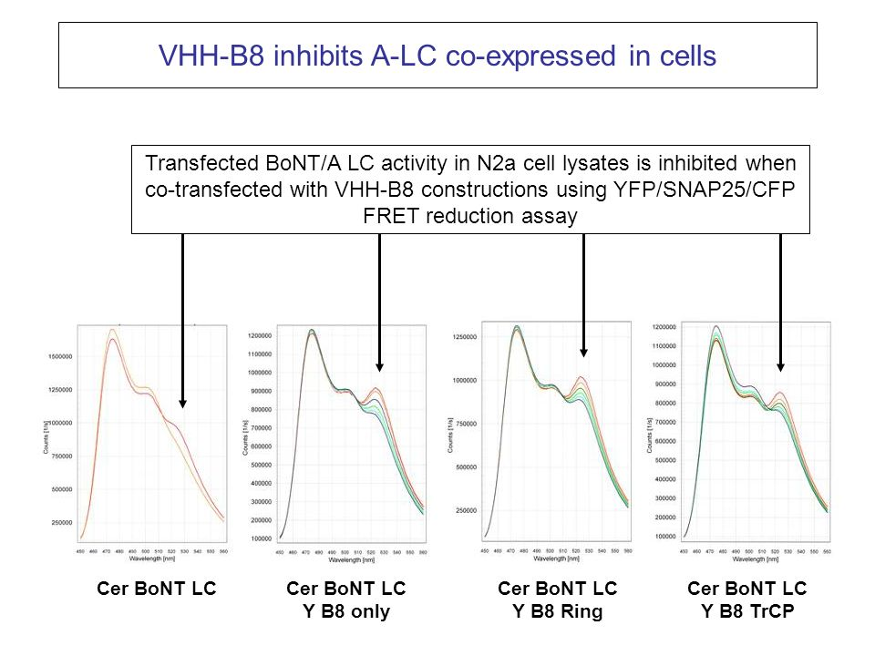 Cer BoNT LCCer BoNT LC Y B8 only Cer BoNT LC Y B8 Ring Cer BoNT LC Y B8 TrCP VHH-B8 inhibits A-LC co-expressed in cells Transfected BoNT/A LC activity
