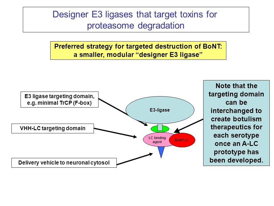 Designer E3 ligases that target toxins for proteasome degradation Preferred strategy for targeted destruction of BoNT: a smaller, modular designer E3