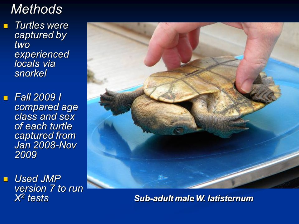 Methods Turtles were captured by two experienced locals via snorkel Turtles were captured by two experienced locals via snorkel Fall 2009 I compared a