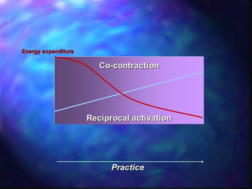 Trunk co-contraction exercise Exercise X External oblique Erector spinea Core co-contraction exercise