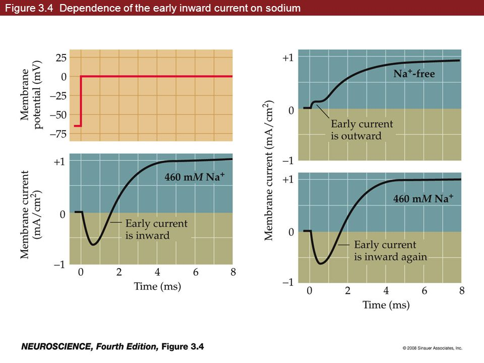 Figure 3.4 Dependence of the early inward current on sodium