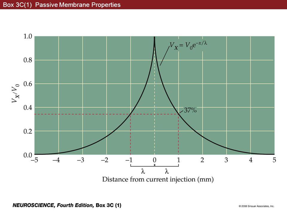 Box 3C(1) Passive Membrane Properties