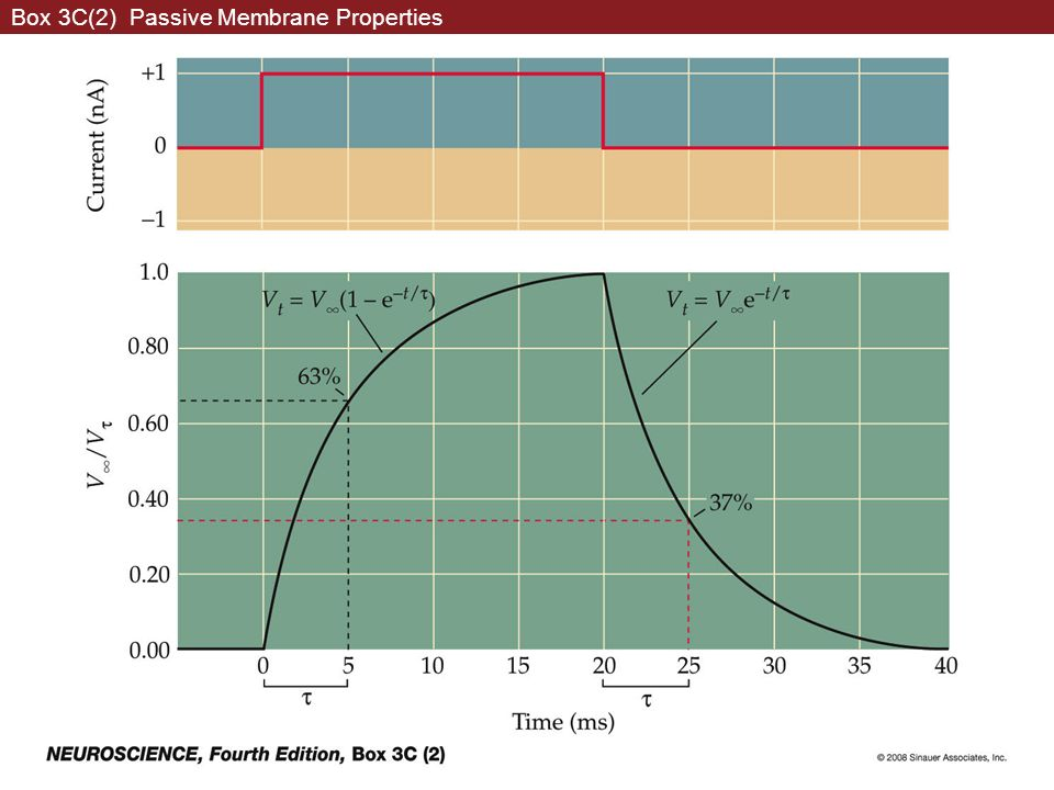 Box 3C(2) Passive Membrane Properties