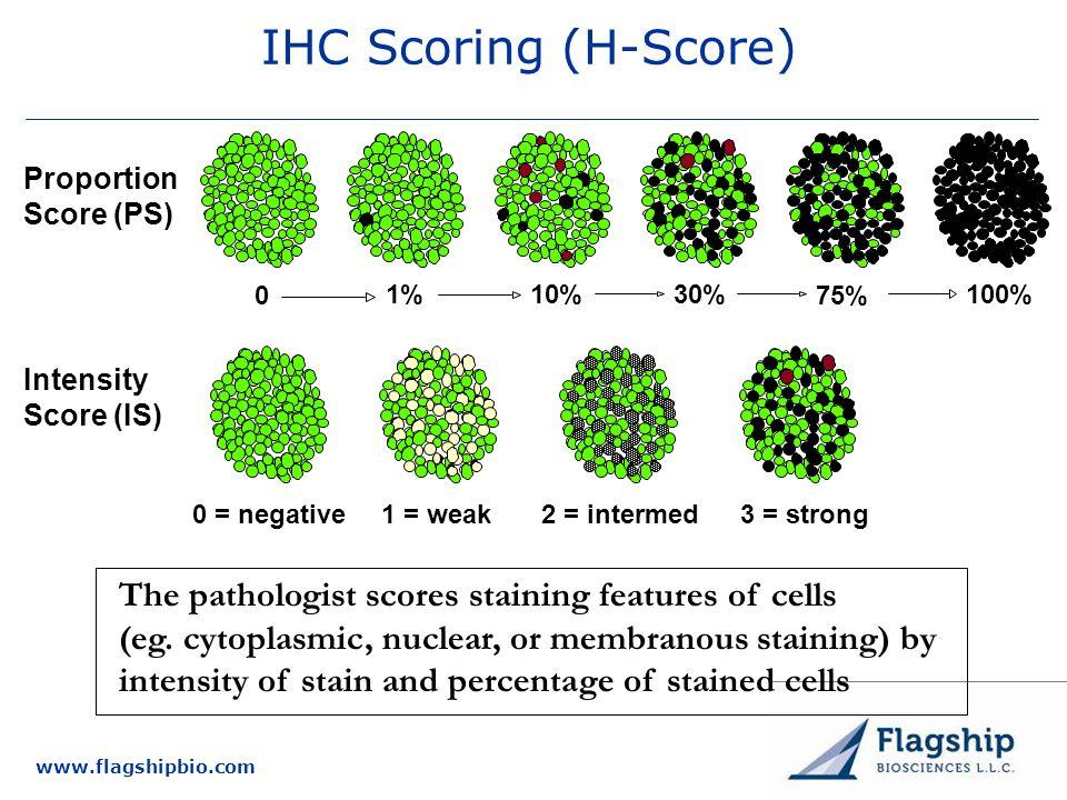 www.flagshipbio.com IHC Scoring (H-Score) Intensity Score (IS) 1 = weak0 = negative2 = intermed3 = strong Proportion Score (PS) 100% 75% 30%10%1% 0 Th