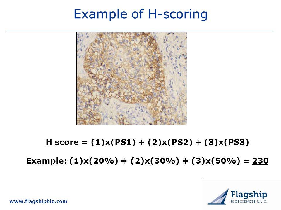 www.flagshipbio.com Example of H-scoring H score = (1)x(PS1) + (2)x(PS2) + (3)x(PS3) Example: (1)x(20%) + (2)x(30%) + (3)x(50%) = 230