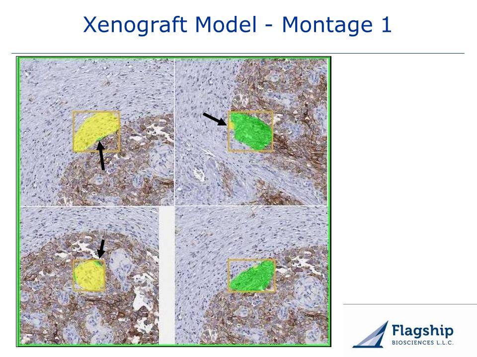 www.flagshipbio.com Xenograft Model - Montage 1