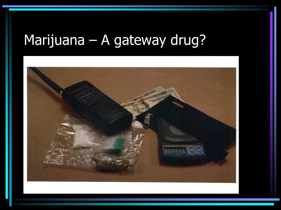 Marijuana – A gateway drug?