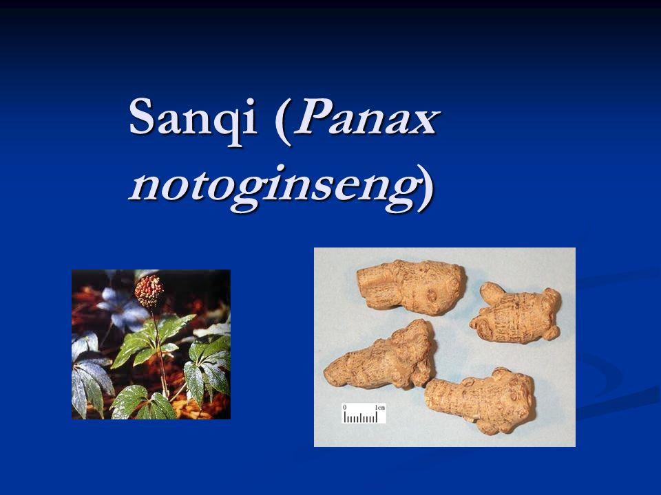 Sanqi (Panax notoginseng)