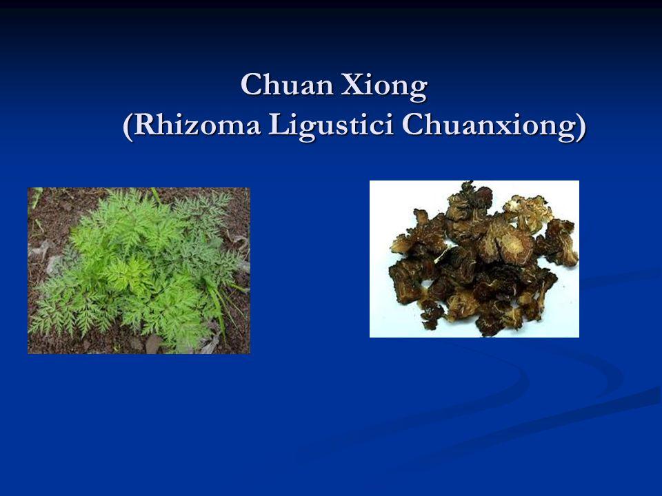 Chuan Xiong (Rhizoma Ligustici Chuanxiong) Chuan Xiong (Rhizoma Ligustici Chuanxiong)