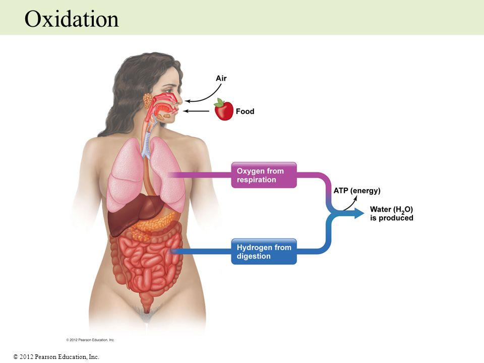 © 2012 Pearson Education, Inc. Oxidation