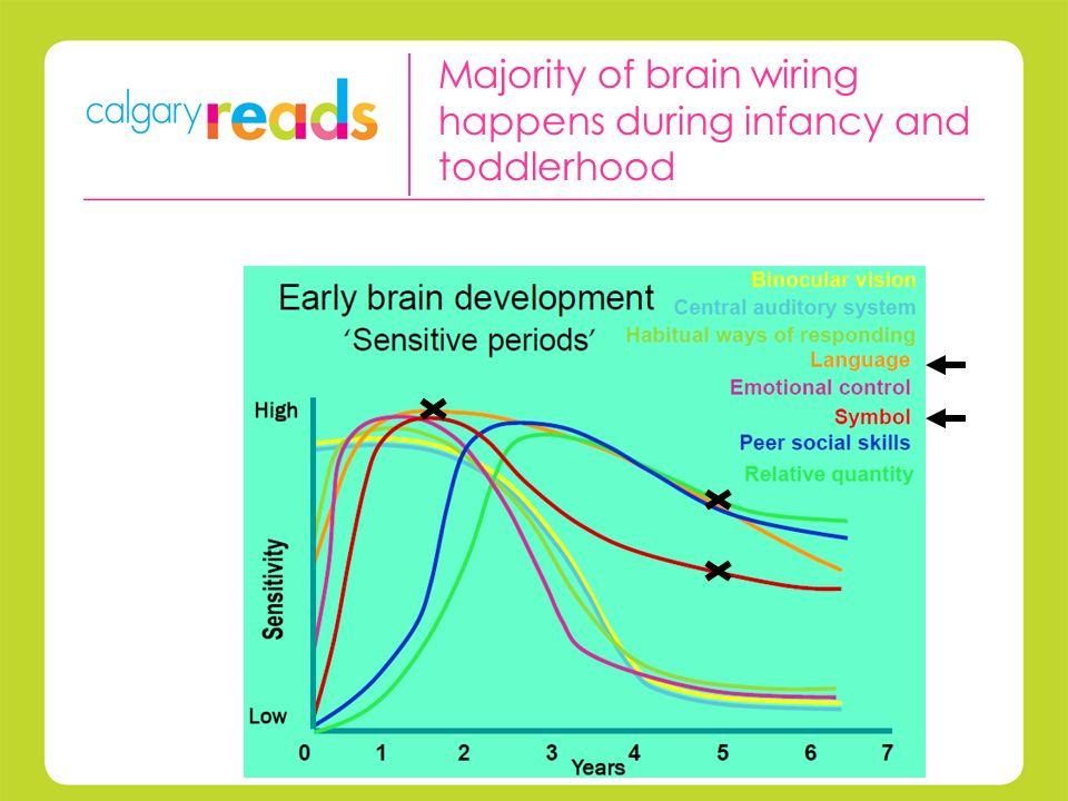 Majority of brain wiring happens during infancy and toddlerhood