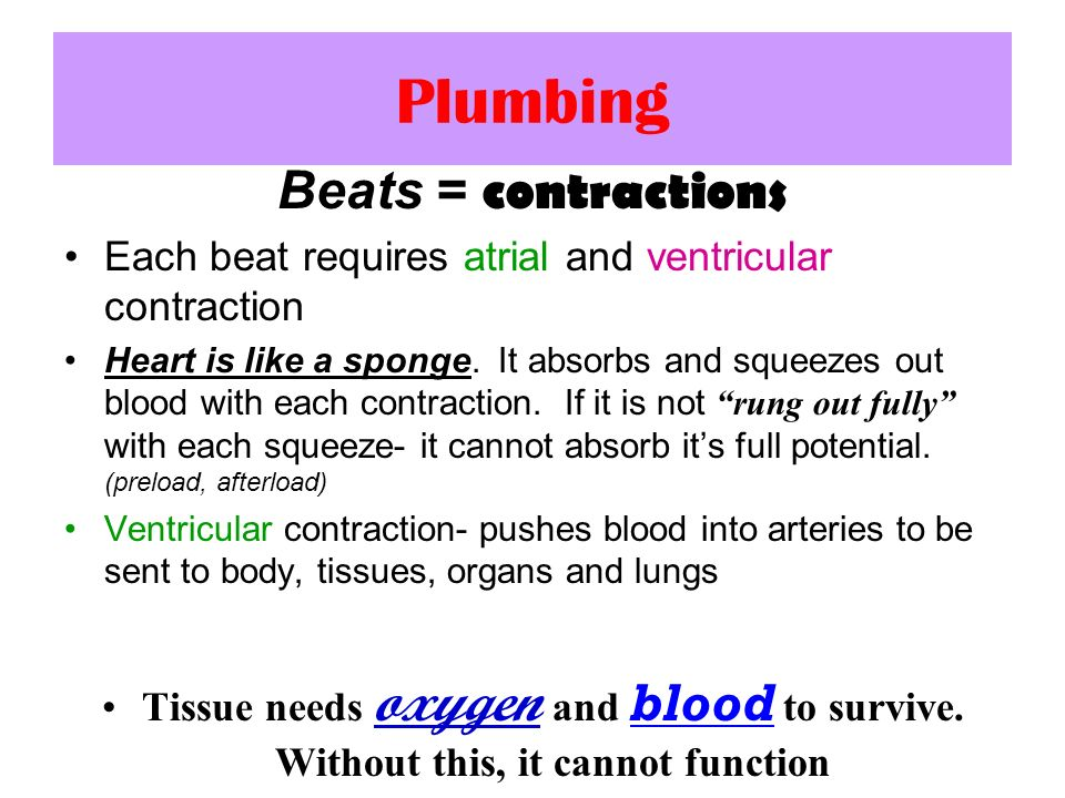 Plumbing Beats = contractions Each beat requires atrial and ventricular contraction Heart is like a sponge. It absorbs and squeezes out blood with eac