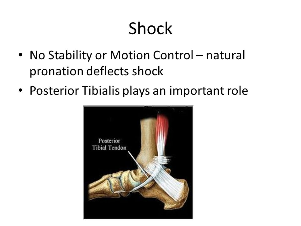 Shock No Stability or Motion Control – natural pronation deflects shock Posterior Tibialis plays an important role