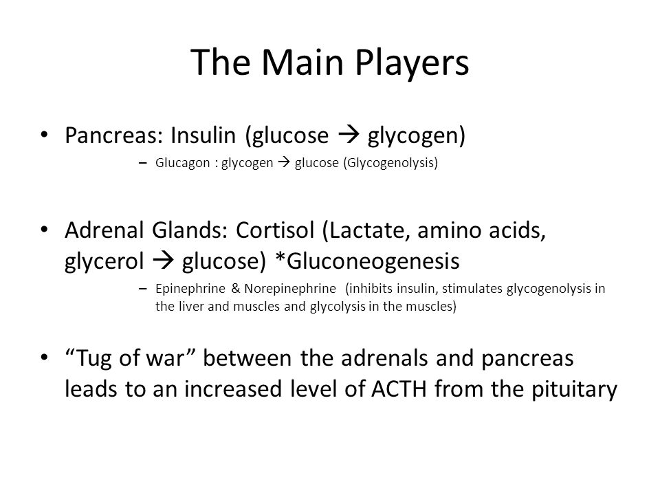 The Main Players Pancreas: Insulin (glucose glycogen) – Glucagon : glycogen glucose (Glycogenolysis) Adrenal Glands: Cortisol (Lactate, amino acids, g