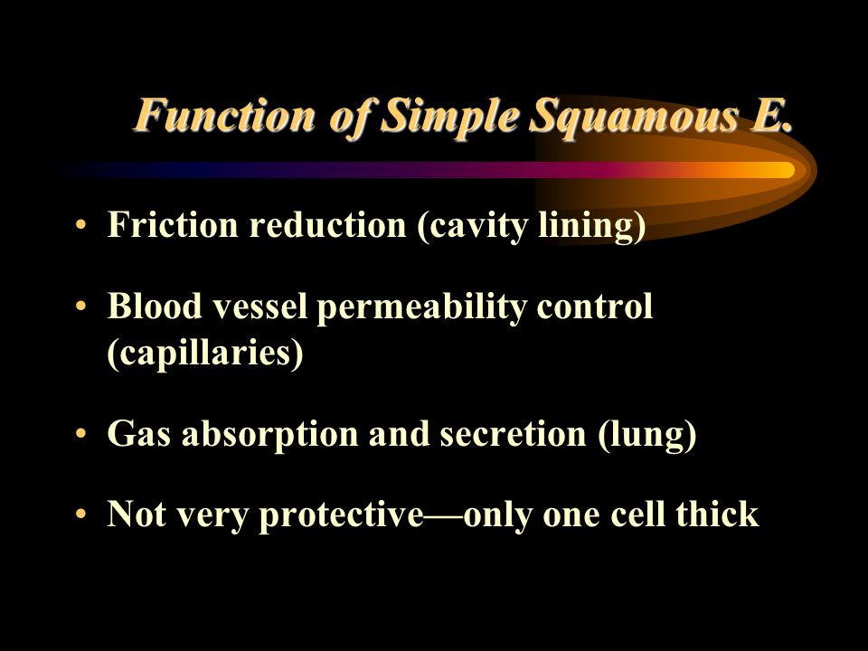 Function of Simple Squamous E. Friction reduction (cavity lining) Blood vessel permeability control (capillaries) Gas absorption and secretion (lung)