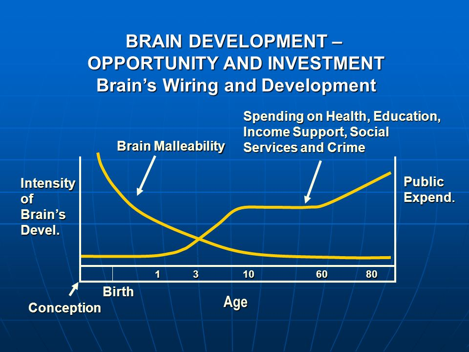 Brain Malleability Spending on Health, Education, Income Support, Social Services and Crime 1 3 10 60 80 1 3 10 60 80 Conception Age IntensityofBrains
