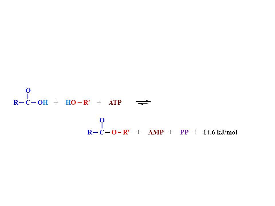 RC O O HO RC O OH+ATP +AMP +PP +14.6 kJ/mol +