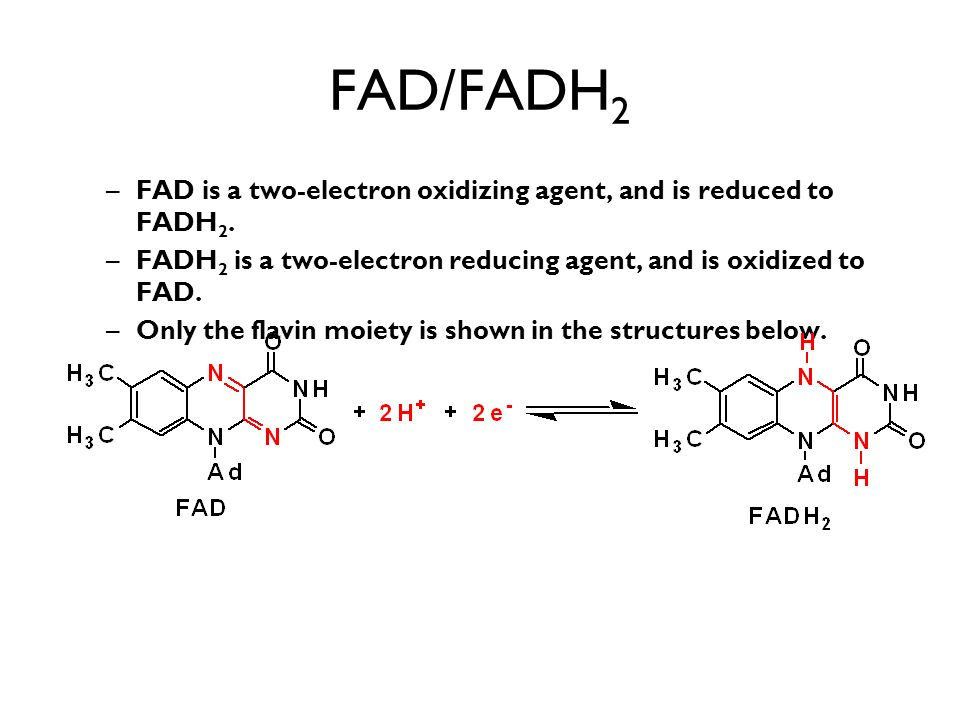 FAD/FADH 2 –FAD is a two-electron oxidizing agent, and is reduced to FADH 2.