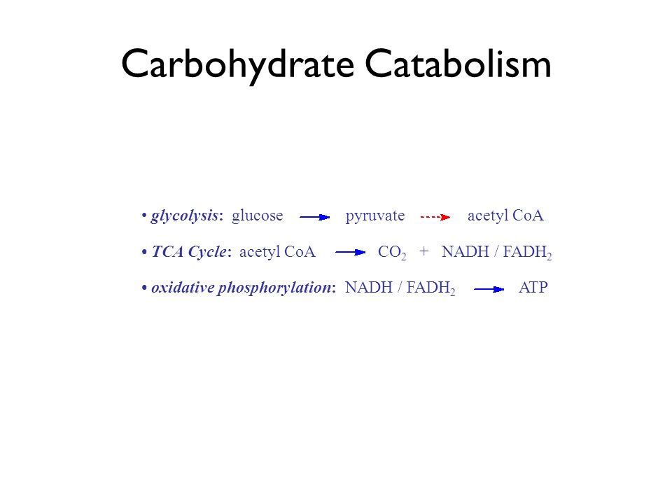 Carbohydrate Catabolism glycolysis: glucose pyruvate acetyl CoA TCA Cycle: acetyl CoA CO 2 + NADH / FADH 2 oxidative phosphorylation: NADH / FADH 2 ATP