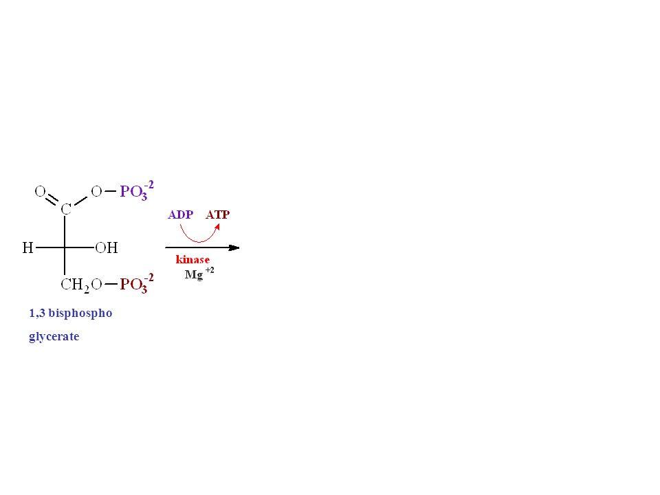 1,3 bisphospho glycerate