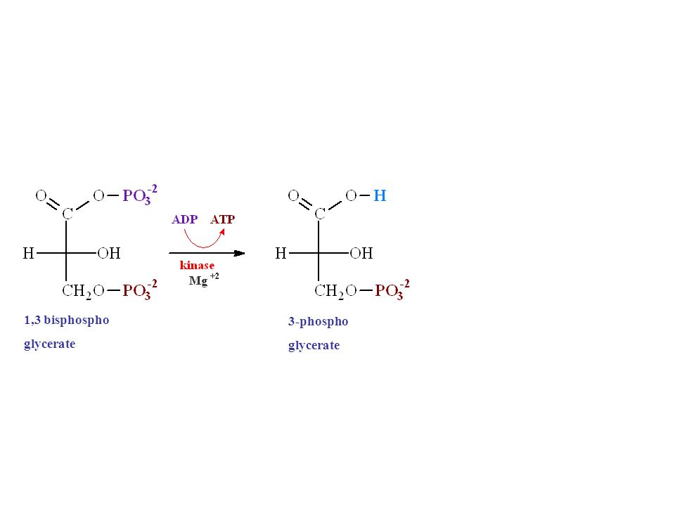 1,3 bisphospho glycerate 3-phospho glycerate