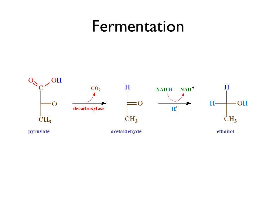 pyruvic acidacetaldehydeethanol Fermentation pyruvateacetaldehydeethanol