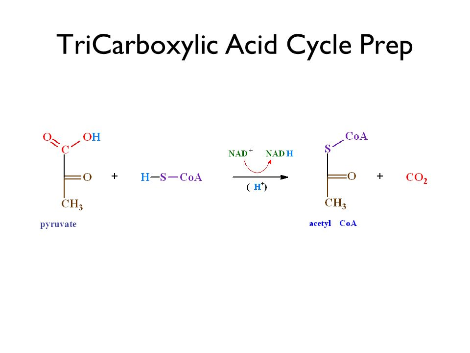 TriCarboxylic Acid Cycle Prep pyruvate