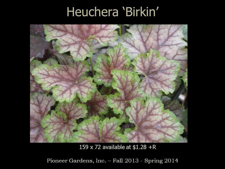 Heuchera Birkin Pioneer Gardens, Inc. – Fall 2013 - Spring 2014 159 x 72 available at $1.28 +R