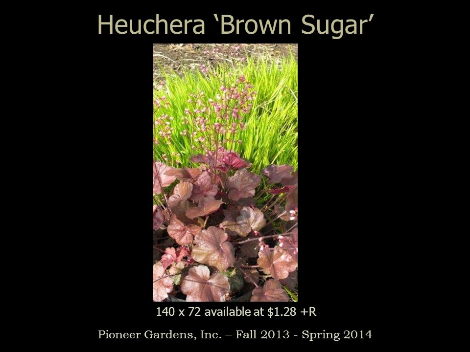 Heuchera Brown Sugar Pioneer Gardens, Inc. – Fall 2013 - Spring 2014 140 x 72 available at $1.28 +R