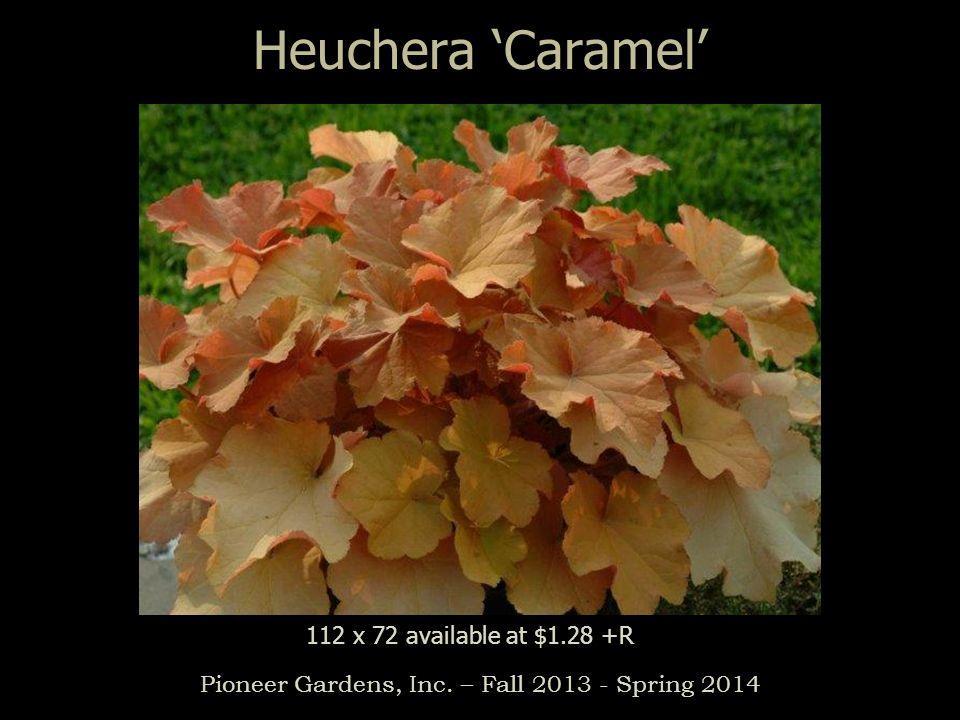 Heuchera Caramel Pioneer Gardens, Inc. – Fall 2013 - Spring 2014 112 x 72 available at $1.28 +R
