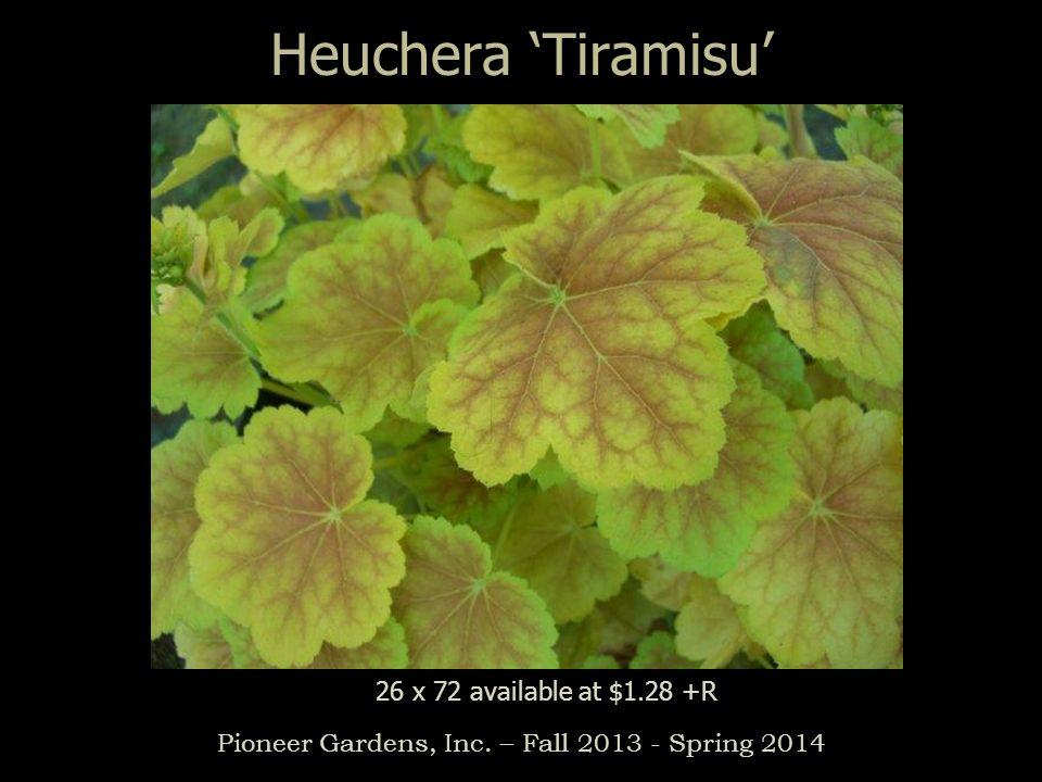 Heuchera Tiramisu Pioneer Gardens, Inc. – Fall 2013 - Spring 2014 26 x 72 available at $1.28 +R
