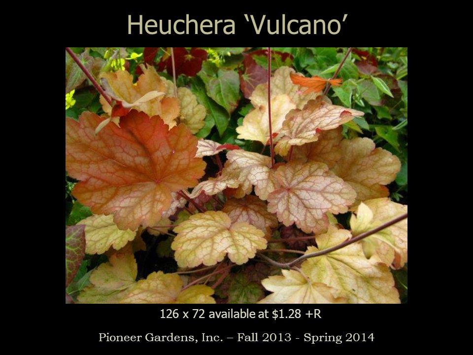 Heuchera Vulcano Pioneer Gardens, Inc. – Fall 2013 - Spring 2014 126 x 72 available at $1.28 +R