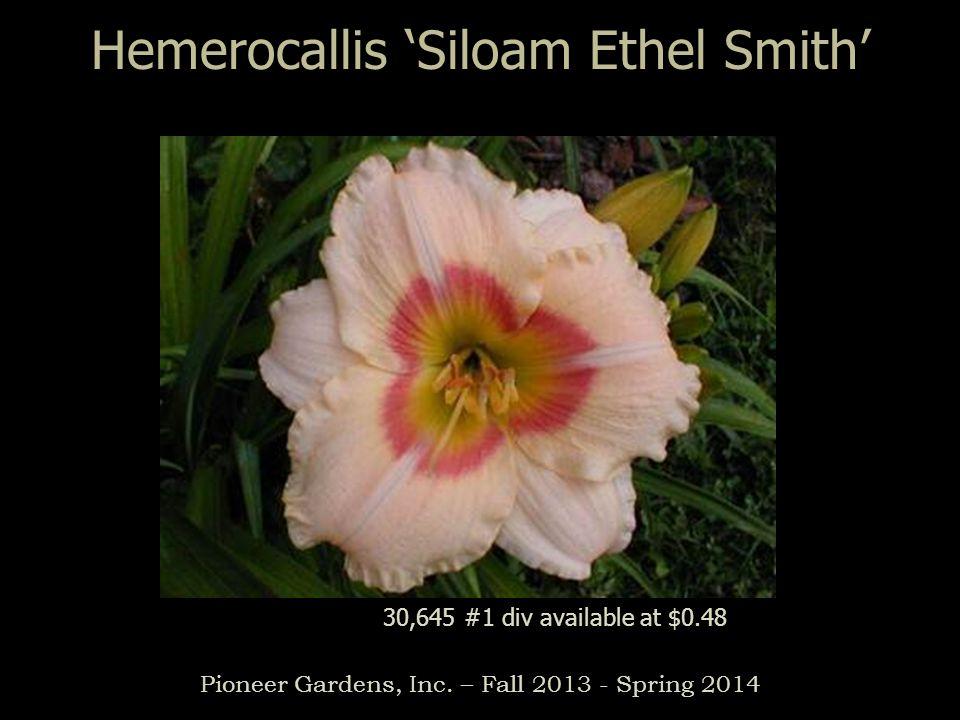 Hemerocallis Siloam Ethel Smith Pioneer Gardens, Inc. – Fall 2013 - Spring 2014 30,645 #1 div available at $0.48