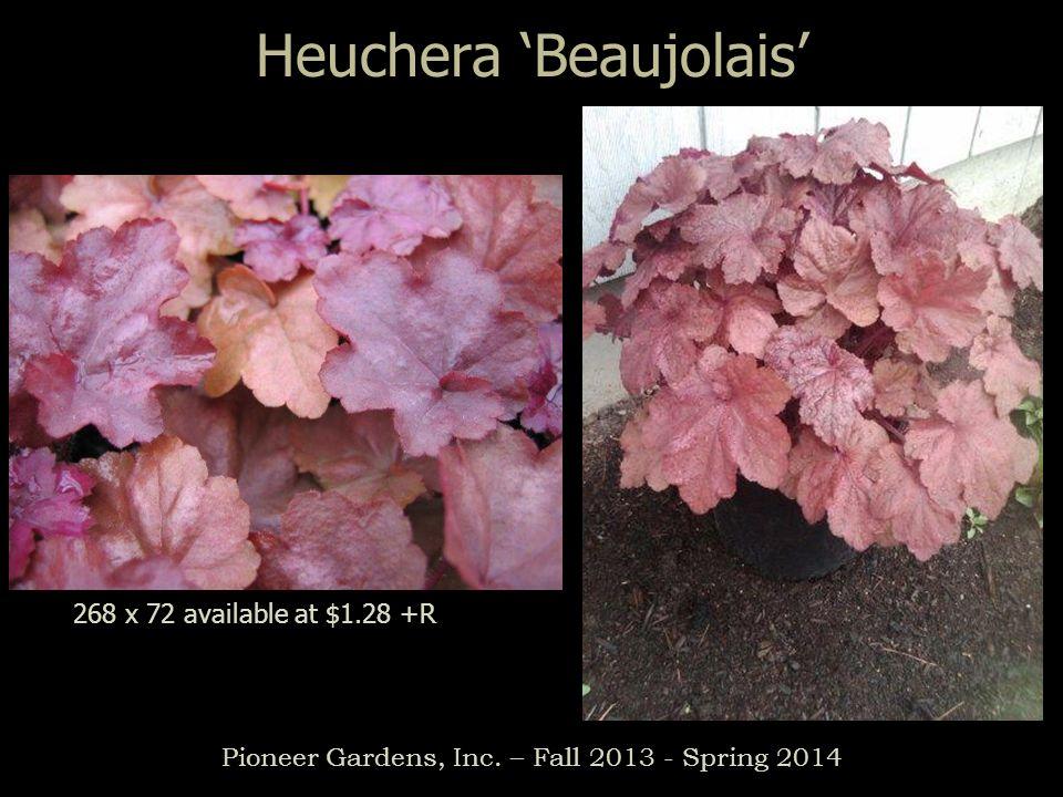 Heuchera Beaujolais Pioneer Gardens, Inc. – Fall 2013 - Spring 2014 268 x 72 available at $1.28 +R