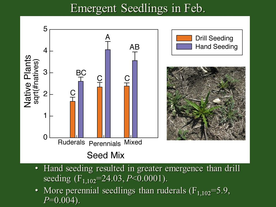 Emergent Seedlings in Feb. Hand seeding resulted in greater emergence than drill seeding (F 1,102 =24.03, P<0.0001). Hand seeding resulted in greater