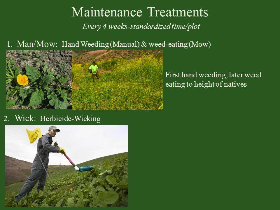 Maintenance Treatments Every 4 weeks-standardized time/plot 1. Man/Mow : Hand Weeding (Manual) & weed-eating (Mow) 2. Wick : Herbicide-Wicking First h