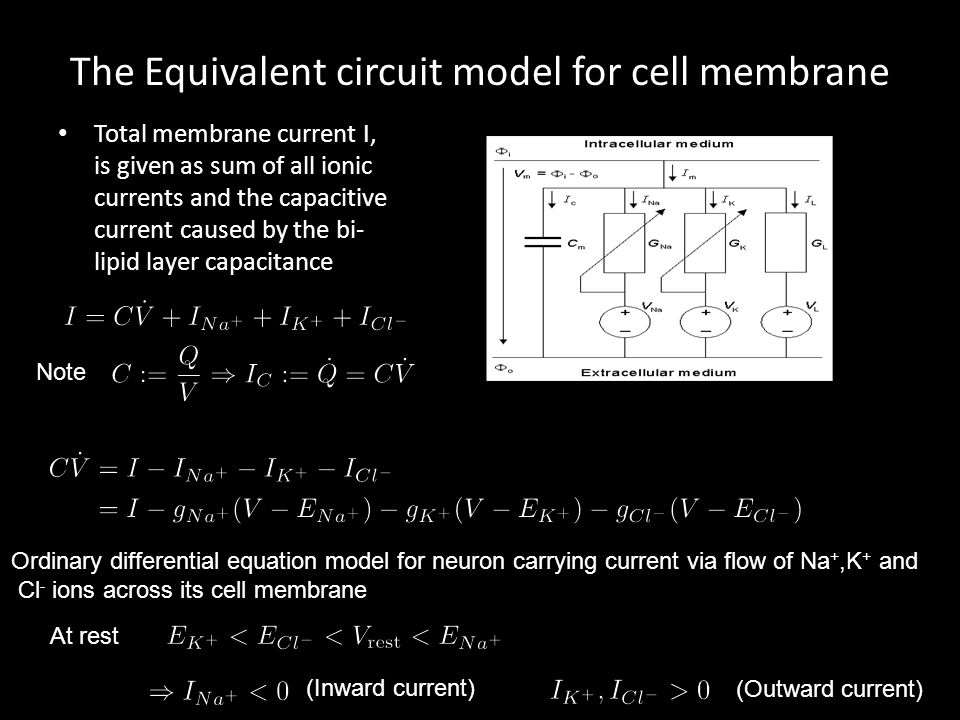 The Equivalent circuit model for cell membrane Total membrane current I, is given as sum of all ionic currents and the capacitive current caused by the bi- lipid layer capacitance Note Ordinary differential equation model for neuron carrying current via flow of Na +,K + and Cl - ions across its cell membrane At rest (Inward current) (Outward current)