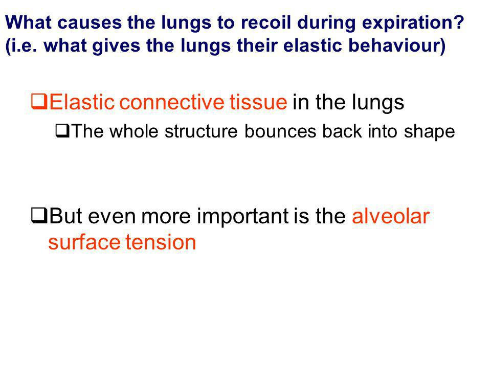 What causes the lungs to recoil during expiration? (i.e. what gives the lungs their elastic behaviour) Elastic connective tissue in the lungs The whol